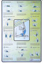 ΑΣΚΗΣΕΙΣ ΚΟΙΛΙΑΚΗΣ ΧΩΡΑΣ [ΑΦΙΣΑ νο8] (Εξαντλημένο). Αφίσες - Χάρτες -  -