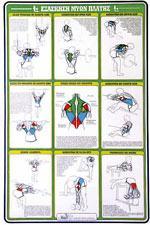 ΕΞΑΣΚΗΣΗ ΜΥΩΝ ΠΛΑΤΗΣ [ΑΦΙΣΑ νο12]. Αφίσες - Χάρτες -  -