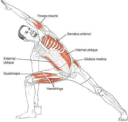 stretching-anatomy-inside